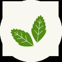 stevia_natural
